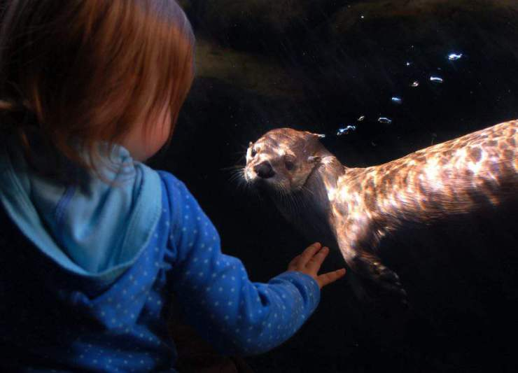 family friendly things to do in richmond maymont-aquarium-kids are a trip