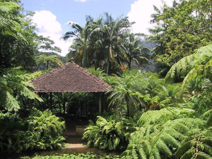 Why Martinique is Perfect for Families Jardins de Balata-Kids Are A Trip