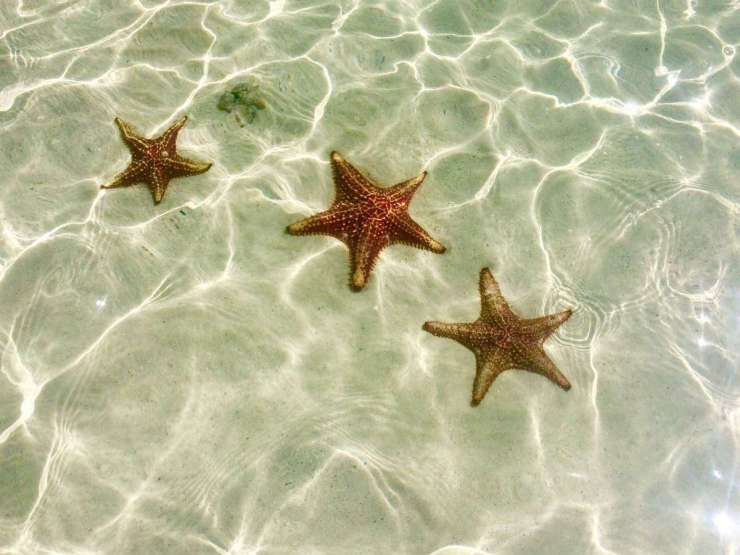 Family Friendly Things to Do in George Town Grand Cayman - Starfish Point - Kids Are A Trip