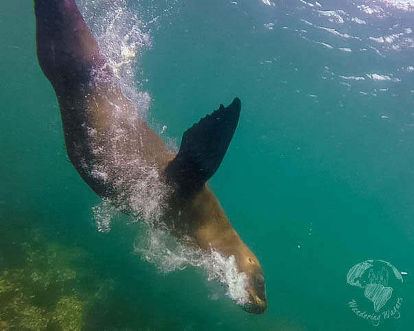 Things to do in Puerto Madryn, Argentina Punta-Loma-Sea-Lions---Wandering-Wagars