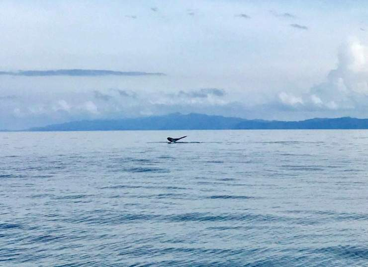 Things to Do in Costa Rica Go Whale Watching-Kids Are A Trip