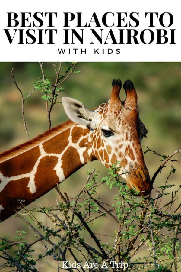 Think you want to take a family safari to Africa? Why not visit Nairobi with kids instead, where you can have all the animal experiences and save some money too! - Kids Are A Trip