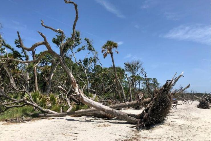 Beach area at Hunting Island State Park.