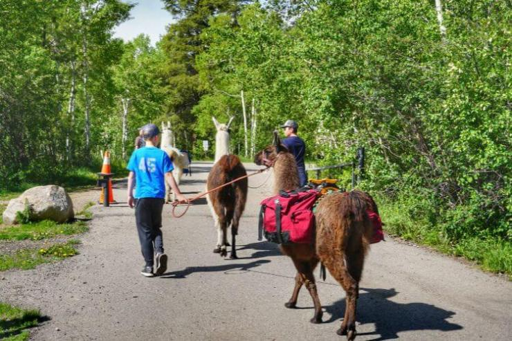 Hiking-with-Llamas-Vail-Colorado-Kids-Are-A-Trip