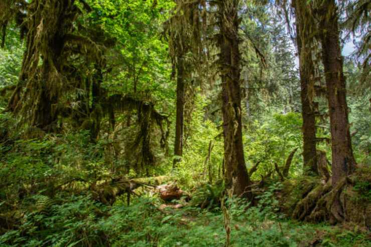 Hoh forest Olympic National Park-Kids Are A Trip