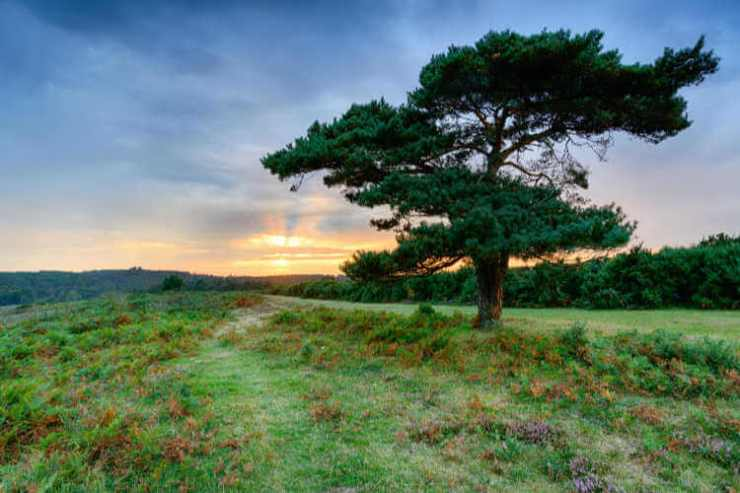 New Forest National Park Hampshire-Kids Are A Trip