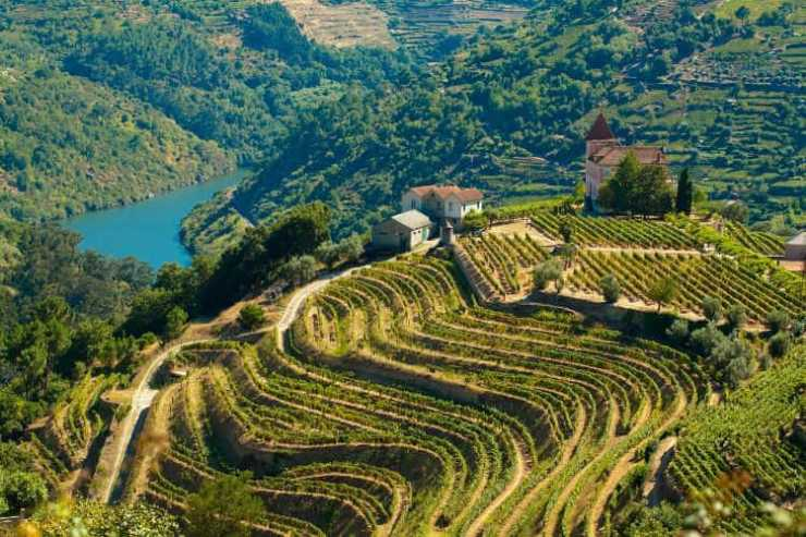 Douro River Valley Vineyards-Kids Are A Trip
