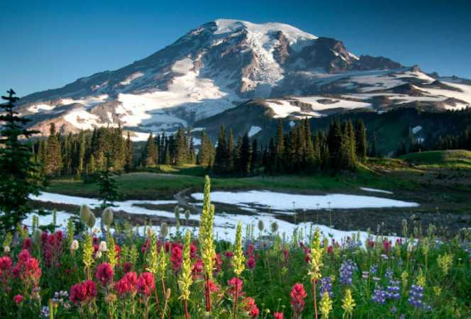 Mount Rainier Wildflowers Edith Creek-Kids Are A Trip