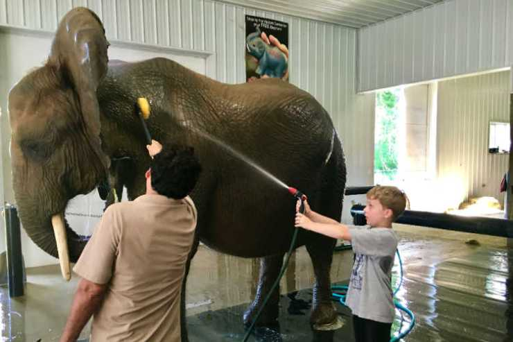 Bathing elephants French Lick Indiana-Kids Are A Trip