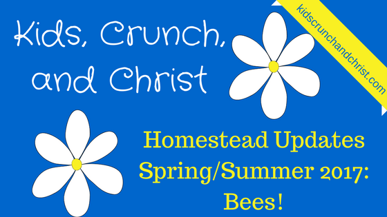 Homestead updates, bees