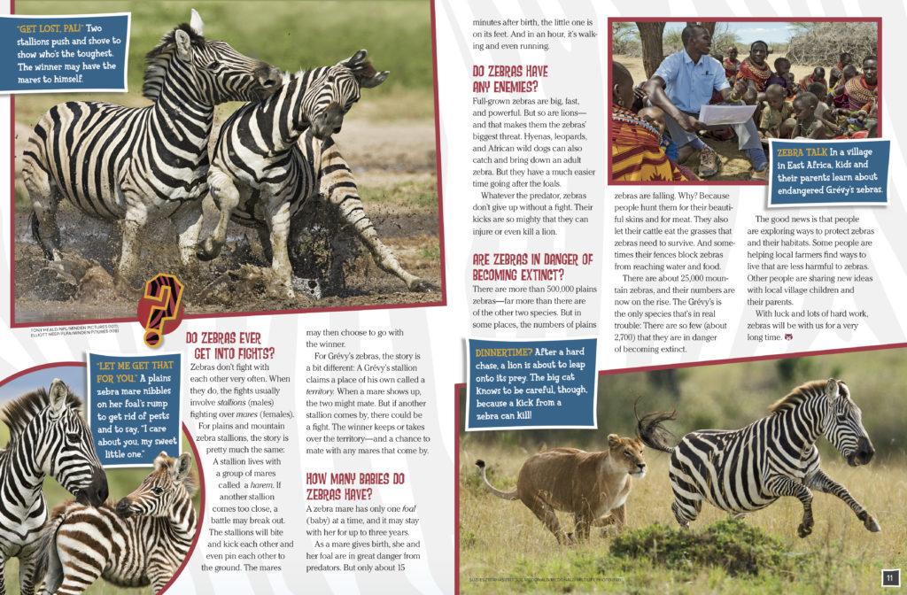 Zebras 3