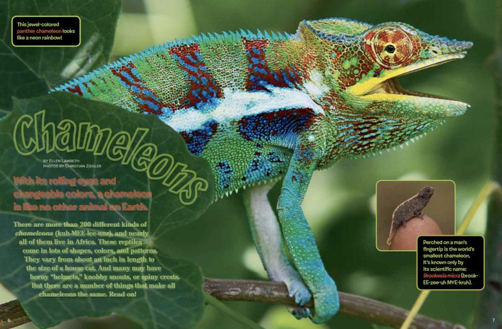 Chameleons Ranger Rick December January 2017 1