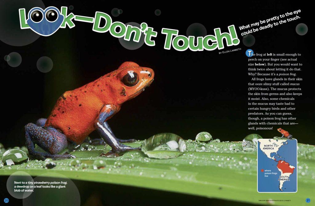 Poison Frogs Ranger Rick February 2017 1