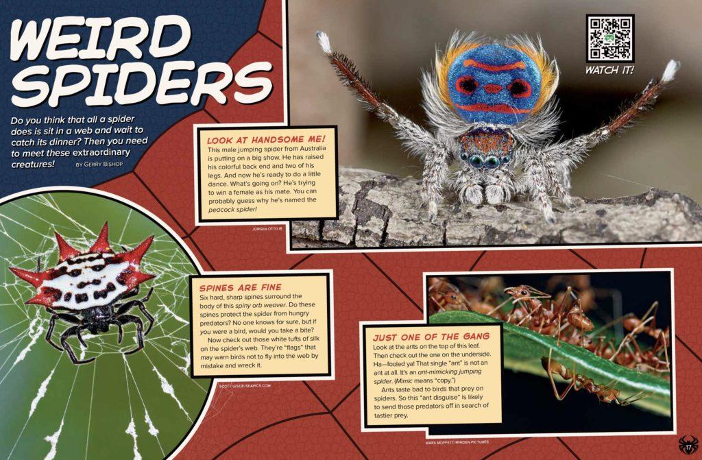 Weird Spiders Ranger Rick August 2017 1
