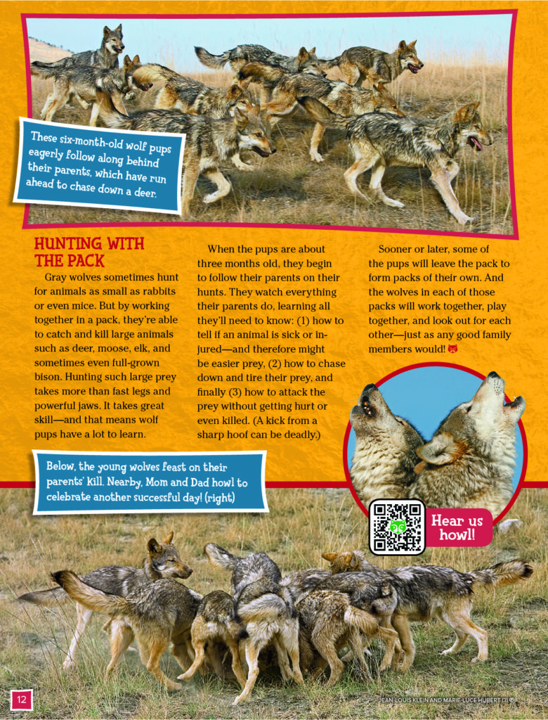 Grey Wolves Ranger Rick November 2017 4