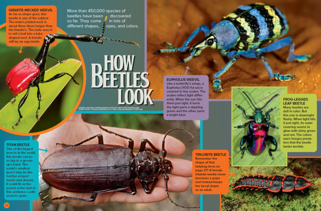 Ranger Rick Beetles September 2016 2