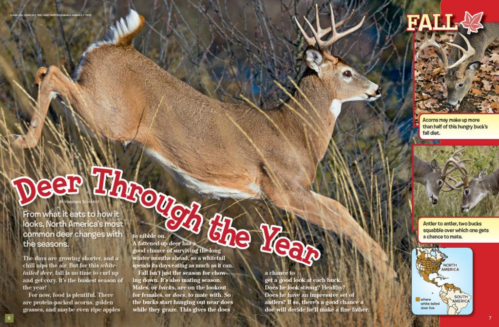 Ranger Rick Deer November 2016 1