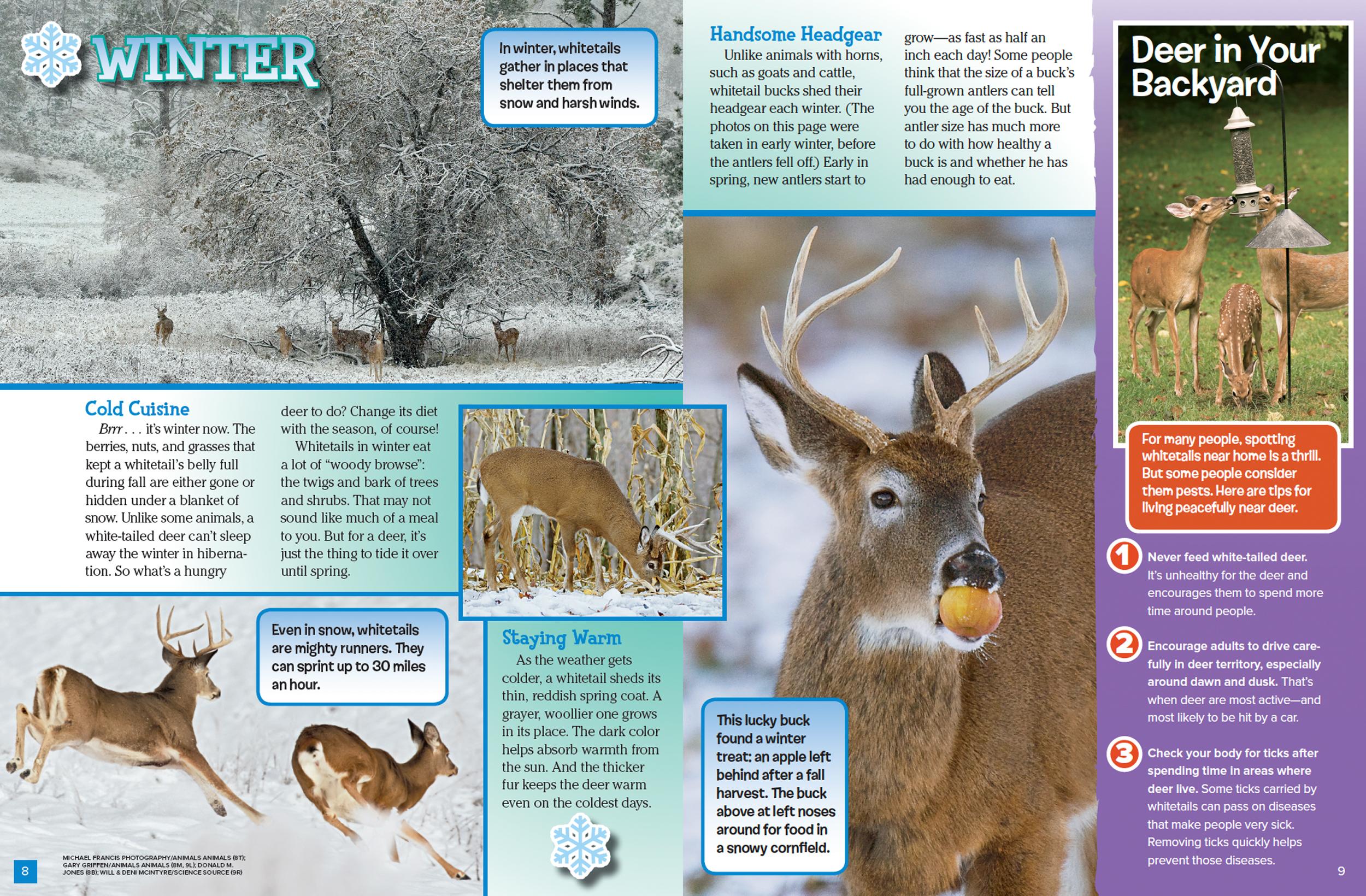 Deer Through the Year - NWF | Ranger Rick