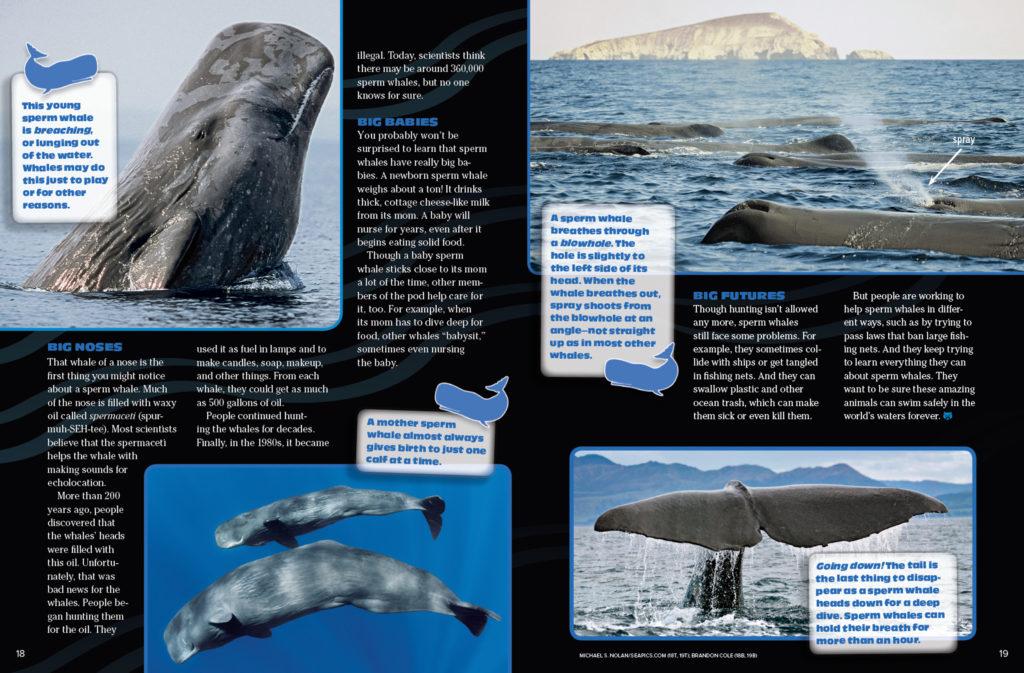 Ranger Rick Sperm Whale November 2016 3