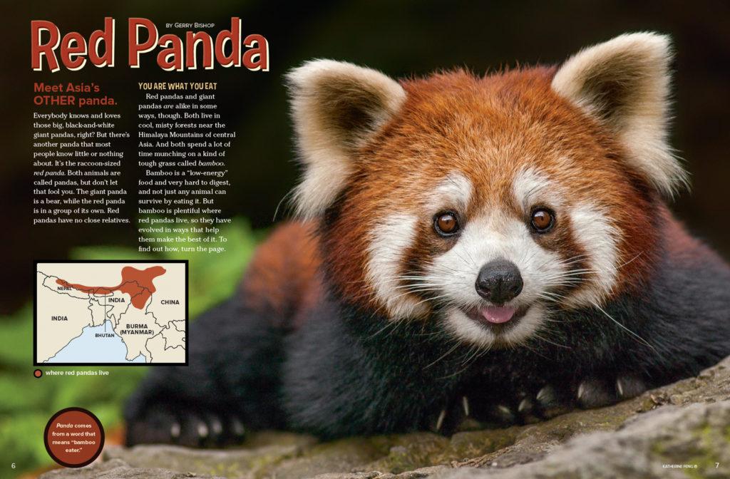 Ranger Rick Red Panda August 2016 1