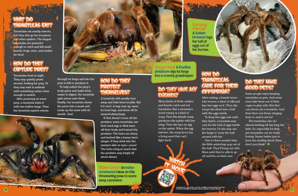 Ranger Rick Spiders October 2016 3