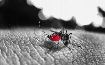 Dengue (knokkelkoorts)