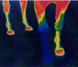 thermograph one shoe
