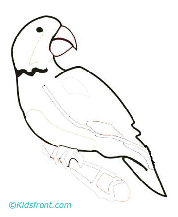 large print colored image of parrot parrot coloring page drawing