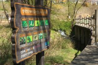 Yeouido Saetgang Ecological Path