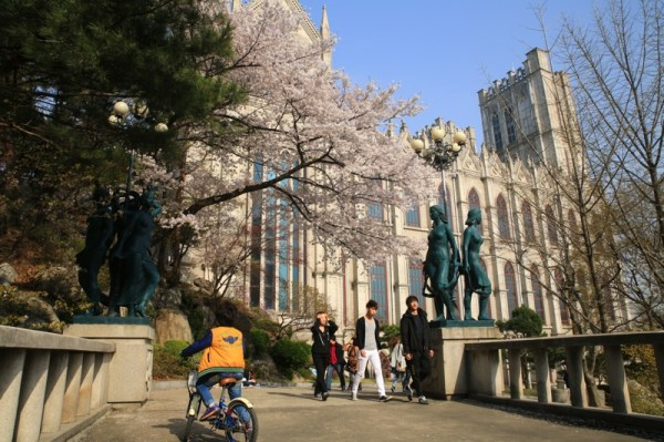 Kyung Hee University Campus – a Cherry Blossom Marvel