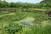 Haeyeorim Gardens