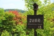 Dreaming Yard Haeyeorim Gardens Korea