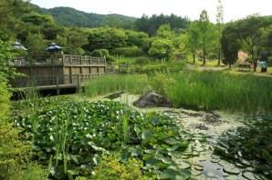 Lotus pond Haeyeorim Gardens