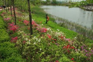 Central Lake Sound Fountain West Seoul Lake Park 서서울 호수공원