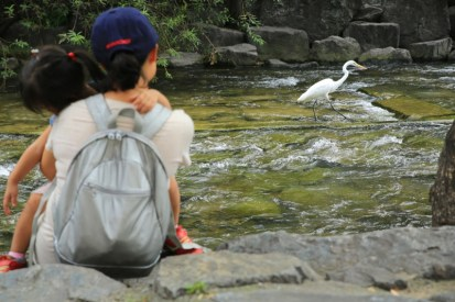 Cheonggyecheon Stream (청계천), a slow family stroll downtown Seoul