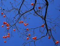 Olympic Park in Winter - Persimmon