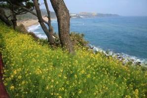 Jeju Island, Jungmun beach view from Hyatt hotel