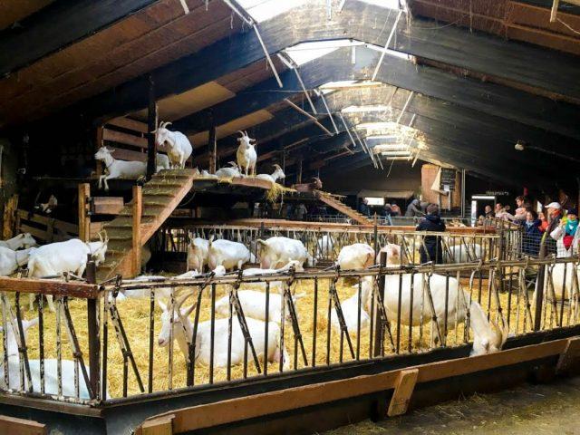 Geitenboerderij Ridammerhoeve Amsterdam | Babies Kitchen