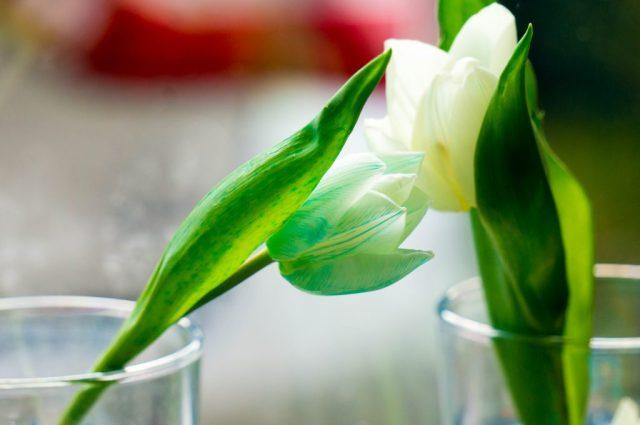 tulpen verven   Babies Kitchen