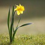 Живая и неживая природа| Примеры| 2 класс