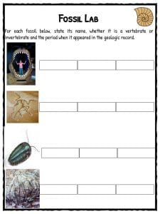 Fossil Facts Amp Worksheets For Kids