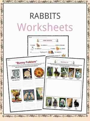 Rabbit Facts, Worksheets & Specie Information For Kids