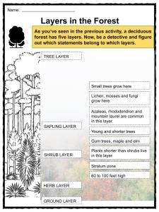Deciduous Forest Biome Facts, Worksheets & Information For Kids