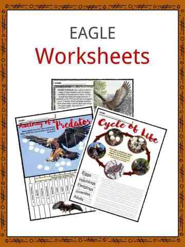 EAGLE Worksheets
