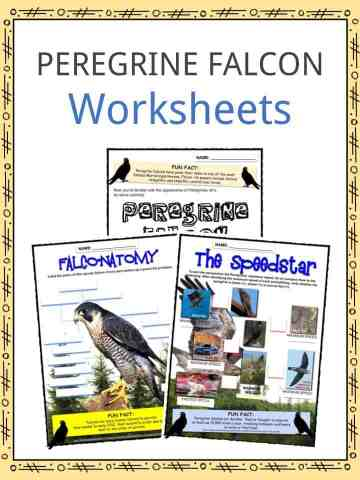 PEREGRINE FALCON Worksheets