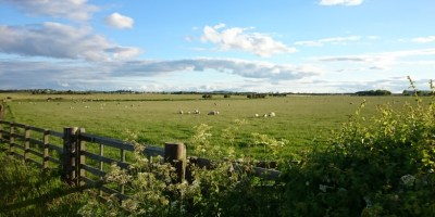 Image of country field scene landscape with sheep in field, fence, blue sky