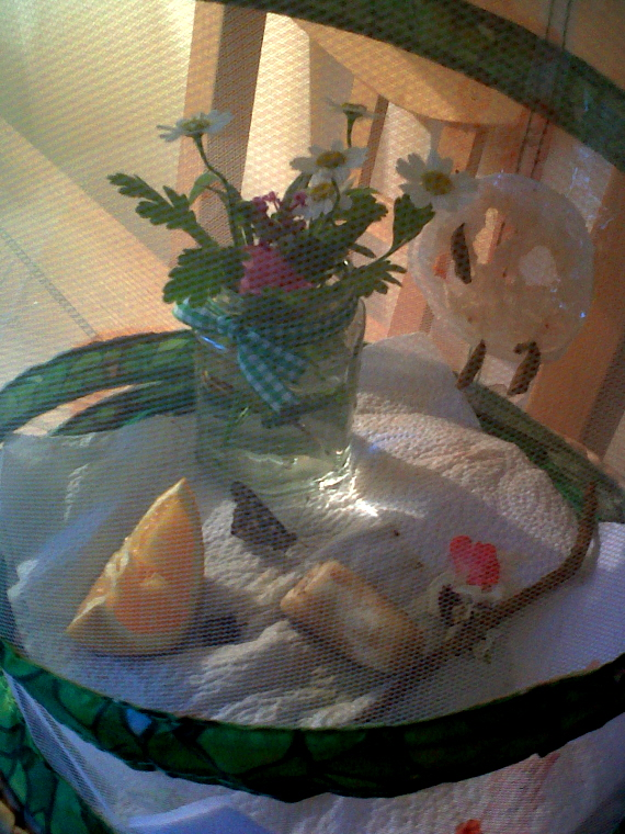 butterfly-garden-on-table-with-cocoons-and-live-butterfly
