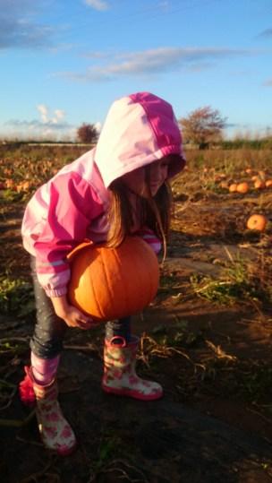 Image of girl in pink coat lugging heavy pumpkin across field