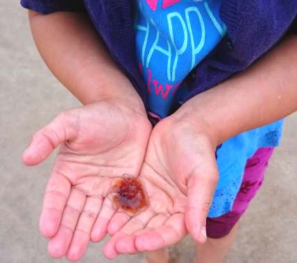 child-holding-tiny-lions-mane-jellyfish