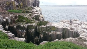 Image of cliff-face-empty-of-birds